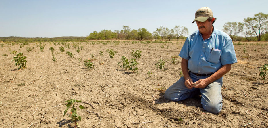 Global Warming Causes Dallas Farms to Die: How Stream Energy is Helping
